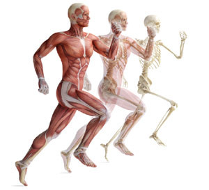 10 Items Anatomy Exam: Musculoskeletal System