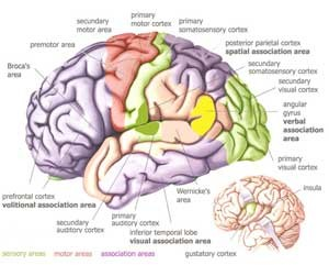 10 Items Neurological Nursing Exam 4: Cranial Nerves